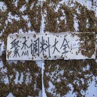 千里香粉 七里香粉 万里香粉 八角粉 八角茴香粉 大茴香粉